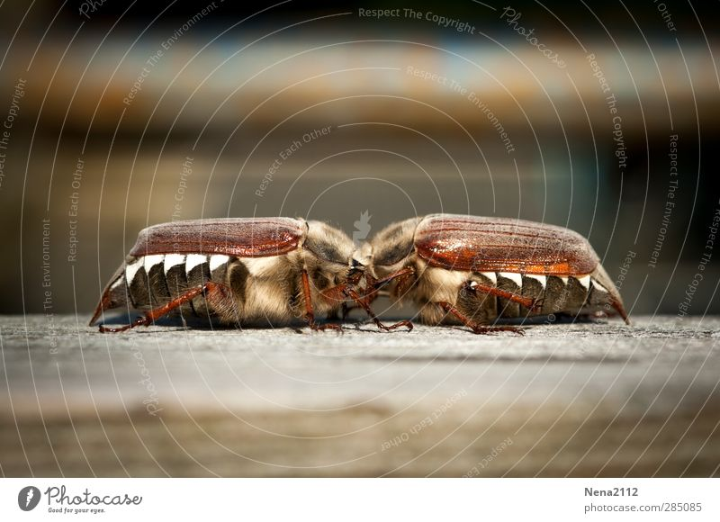 Nature Animal Spring Happy Brown Power Glittering Pair of animals In pairs Cute Touch Friendliness Painting (action, work) Insect Kissing Lovers
