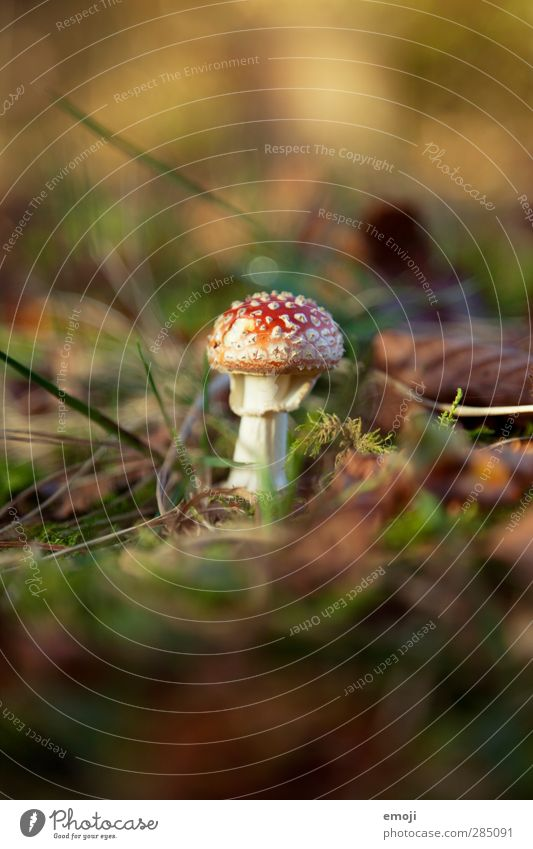 he can't fly :( Environment Nature Earth Autumn Beautiful weather Plant Natural Green Red Amanita mushroom Mushroom Woodground Colour photo Exterior shot