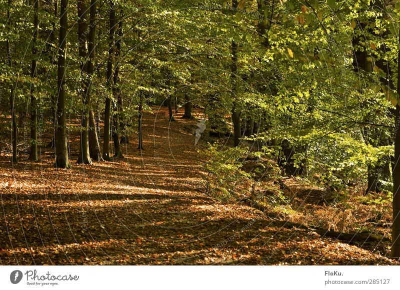 Nature Green Plant Tree Leaf Landscape Forest Environment Autumn Lanes & trails Brown Natural Hiking Beautiful weather To go for a walk Footpath