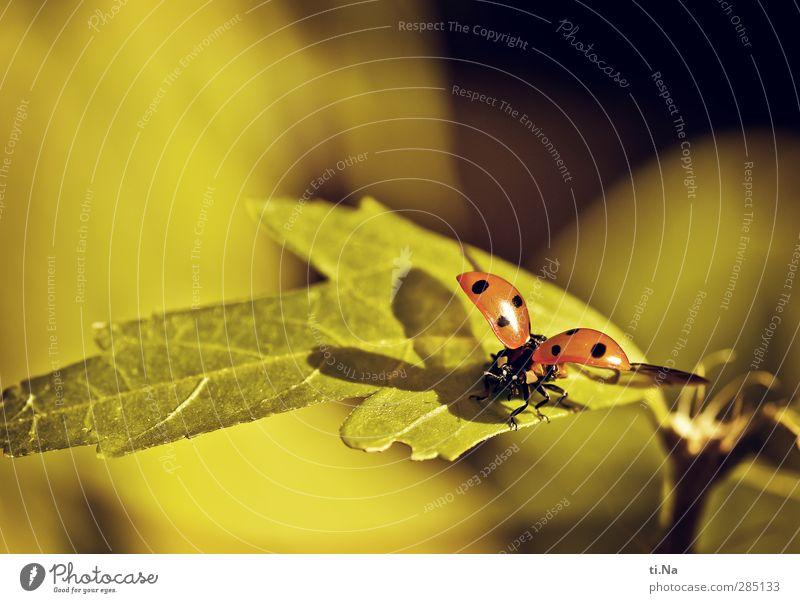 """Ladybird. Summer Autumn Bushes Hibiscus Garden Park Wild animal Insect 1 Animal Flying Crawl Hiking Beautiful Small Natural Yellow Green Orange Black Ease"