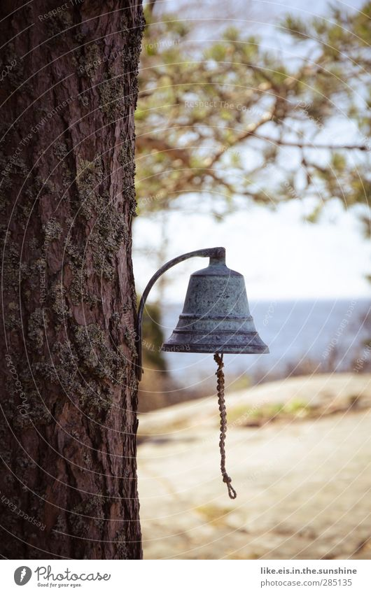 Sweetie, the bells never ring. Vacation & Travel Summer Summer vacation Living or residing Environment Nature Beautiful weather Tree Bell chime String Tree bark