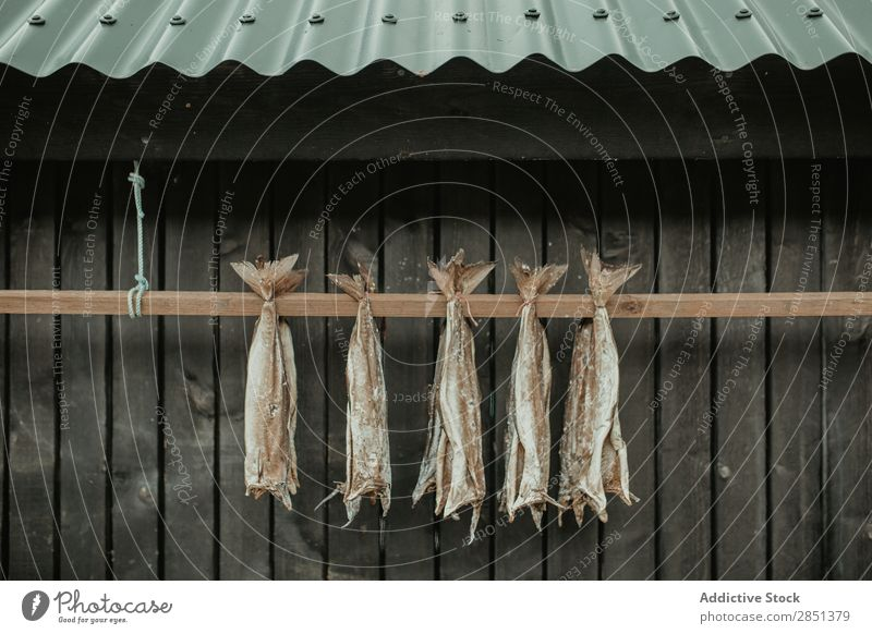 Dried fish hanging on wooden plant Fish drying Exterior shot Rural Landscape House (Residential Structure) Dry Tradition Food Row Healthy Delicious Fishery