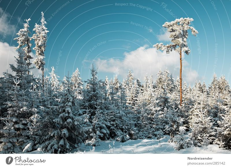 Sky Nature Blue White Tree Clouds Calm Landscape Winter Forest Snow Moody Ice Tourism Beautiful weather Idyll
