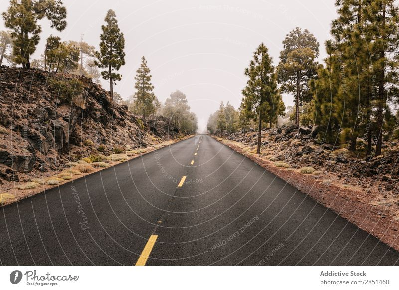 Road running away in rocks Street Rock Highway Traveling Tourism Summer Landscape Vacation & Travel Trip Nature Curve Cliff Vantage point Tree Rural Adventure