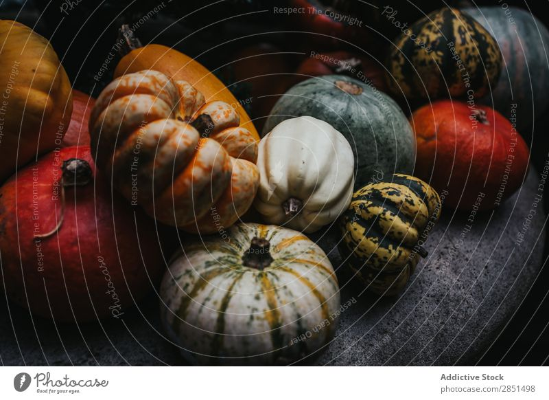Colorful pumpkins in dark composition Pumpkin Dark Harvest Rustic Cultivation Autumnal Seasons Multicoloured Garden Organic Agriculture Background picture
