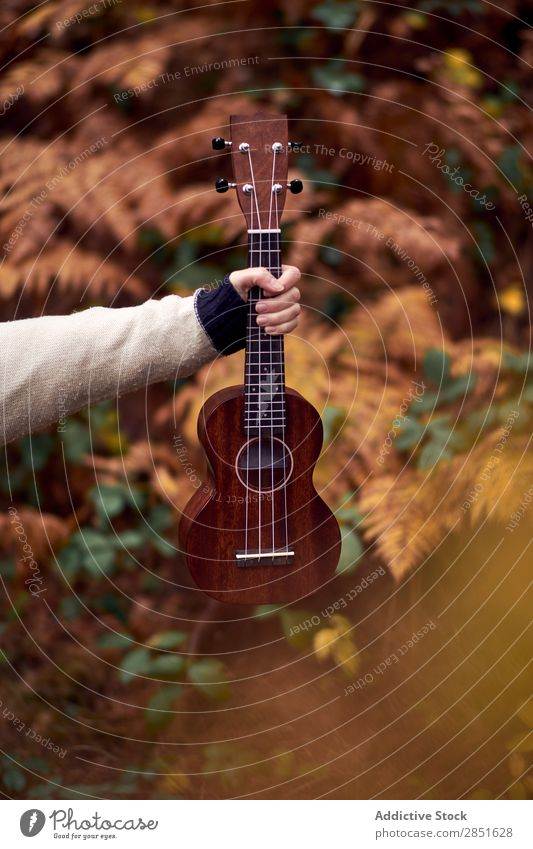 Hand with ukulele in forest Forest Guitar Ukulele Small Music Nature Acoustic instrument Musical Playing Guitarist Countries Musician String Beautiful Wood