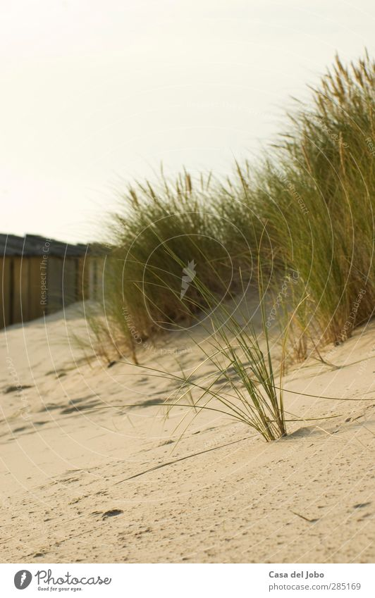 Sky Nature Vacation & Travel Water Summer Plant Sun Ocean Loneliness Beach Clouds Calm Landscape Grass Sand Air