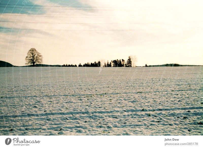 Sky Tree Landscape Winter Far-off places Meadow Cold Snow Horizon Ice Field Bushes Frost Snowscape Furrow Winter mood