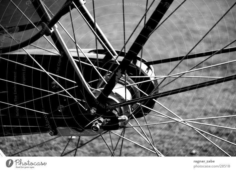 wheel Gazelle Bicycle Leisure and hobbies primeur Black & white photo Contrast Spokes