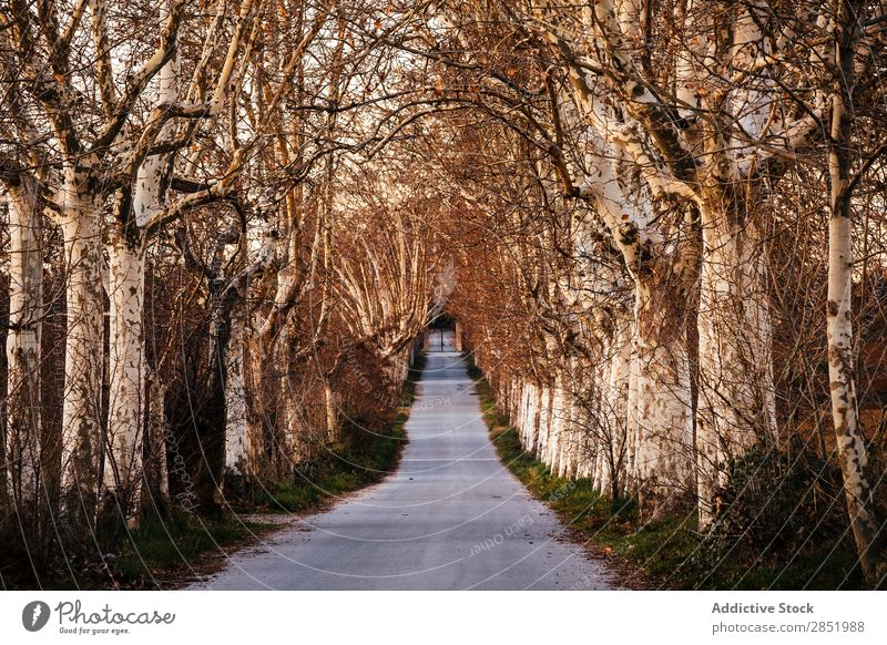Road of trees Street Sunset Park Lanes & trails Tree Autumn Nature Beautiful Exterior shot Light Morning Landscape Forest Sunlight Sunrise Running