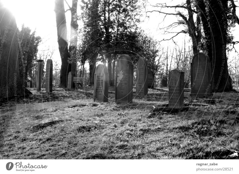 graveyard Cemetery Religion and faith Tree House of worship Black & white photo Jewish cemetery