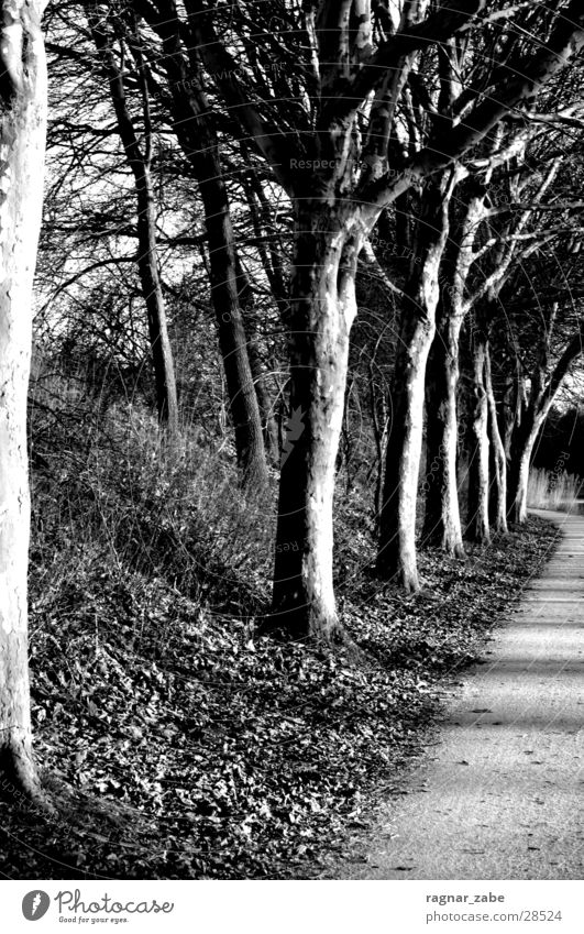 White Tree Black Sadness Lanes & trails Sewer Emsland district
