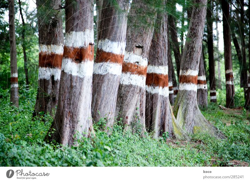 red, I white, red. Environment Nature Landscape Plant Tree Park Forest Herd Signs and labeling Line Stripe Stand Growth Simple Firm Large Tall Natural Red White