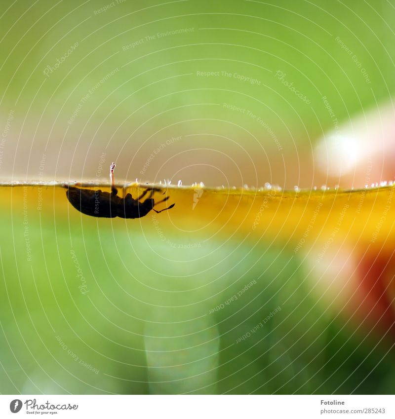 Nature Green Plant Leaf Animal Black Yellow Environment Autumn Small Natural Beautiful weather Insect Autumn leaves Beetle Autumnal
