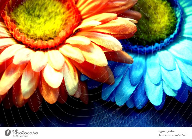 Flower Blue Orange Placed