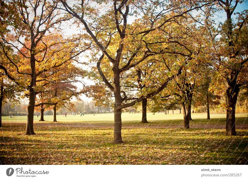 An autumn day To go for a walk Hiking Human being Nature Sunlight Autumn Tree Park Meadow Relaxation To fall Hang Stand Illuminate To dry up Natural Blue Brown