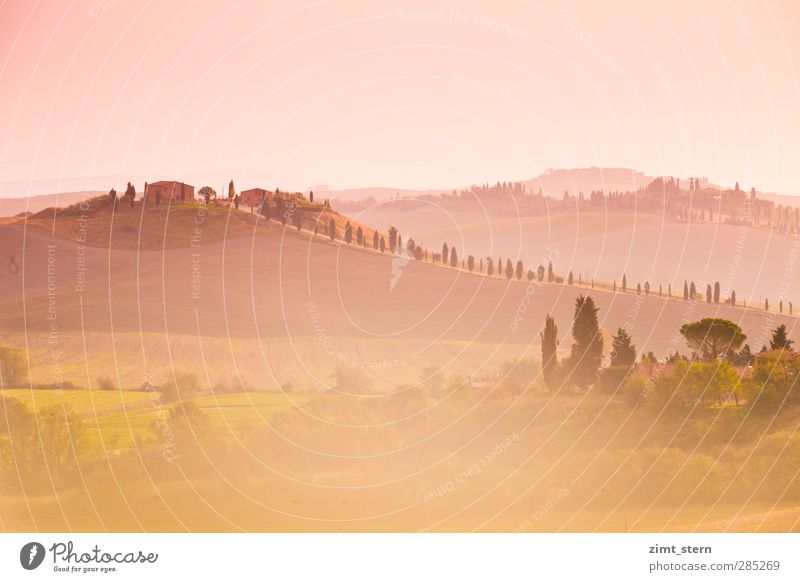 dreaming in tuscany Vacation & Travel Tourism Trip Far-off places Tuscany Italy Art Work of art Painting and drawing (object) Nature Landscape Sunrise Sunset