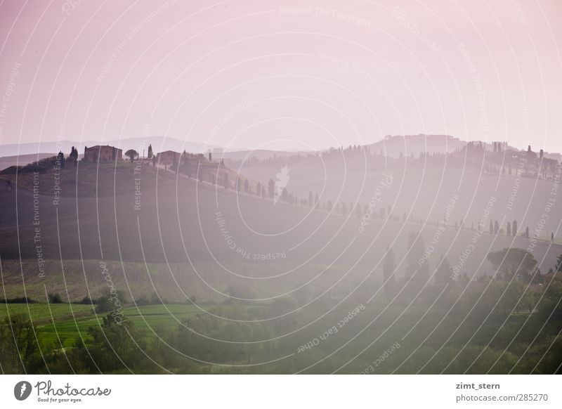 dreaming in tuscany II Harmonious Relaxation Vacation & Travel Tourism Trip Art Painting and drawing (object) Nature Landscape Elements Sunrise Sunset Tree