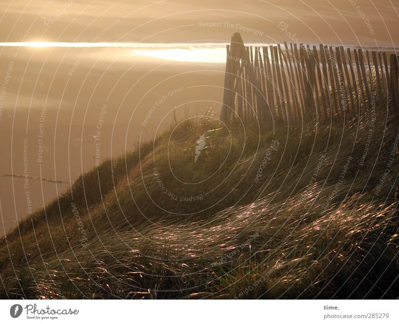 Evening at the sea Sand Sunlight Autumn Grass Coast Beach Ocean Dune Marram grass Fence Fence post Glittering Soft Moody Trust Protection Safety (feeling of)
