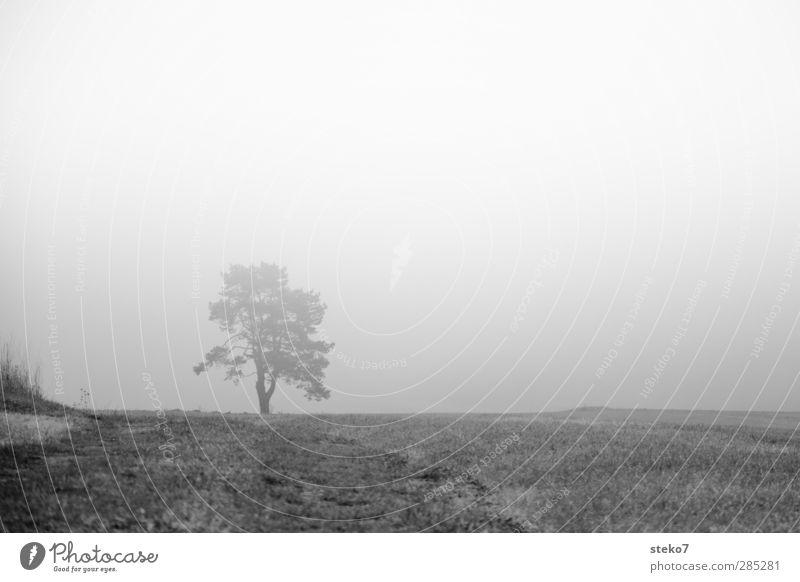 White Tree Black Dark Autumn Grass Field Fog Mystic Bad weather