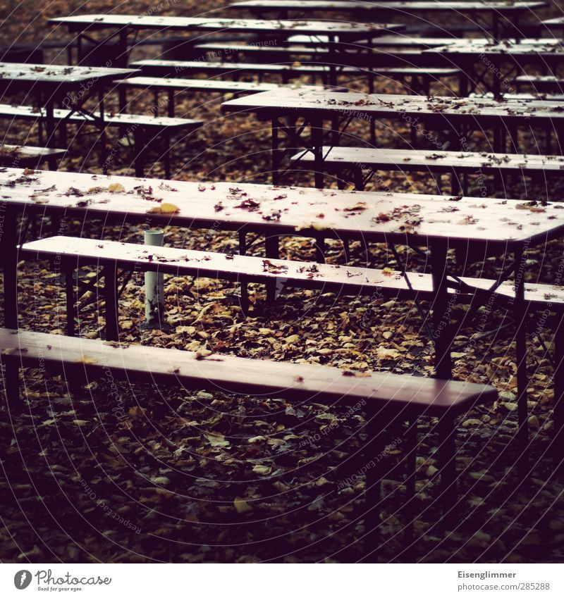 [wpt HH 10.12] Winter break Autumn Leaf Garden Park Ale bench Beer garden beer set Beer table Apocalyptic sentiment Break Loneliness Colour photo Subdued colour