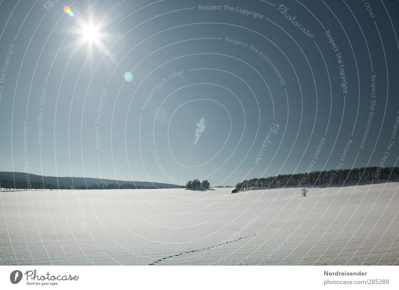 winter sun Freedom Winter Snow Winter vacation Hiking Sun Beautiful weather Forest Animal tracks Relaxation Glittering Fresh Blue White Anticipation Calm