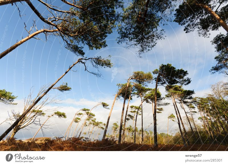 Sky Nature Vacation & Travel Plant Tree Loneliness Landscape Forest Autumn Grass Tourism Island Beautiful weather Adventure Uniqueness Baltic Sea