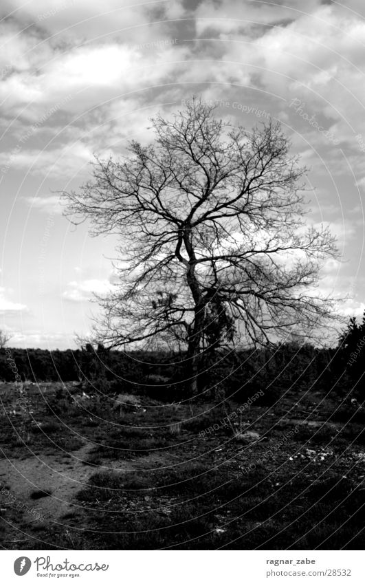 Tree Loneliness Calm Landscape Death Sadness Blaze Grief Heathland