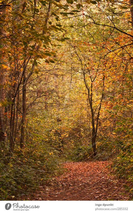 by nature Environment Nature Landscape Autumn Deciduous forest Autumn leaves Multicoloured Forest Natural Lanes & trails To go for a walk Promenade Footpath