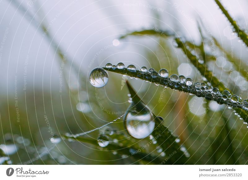drops on the green leaves Grass Plant Leaf Green Drop Rain Glittering Bright Garden Floral Nature Abstract Consistency Fresh Exterior shot background
