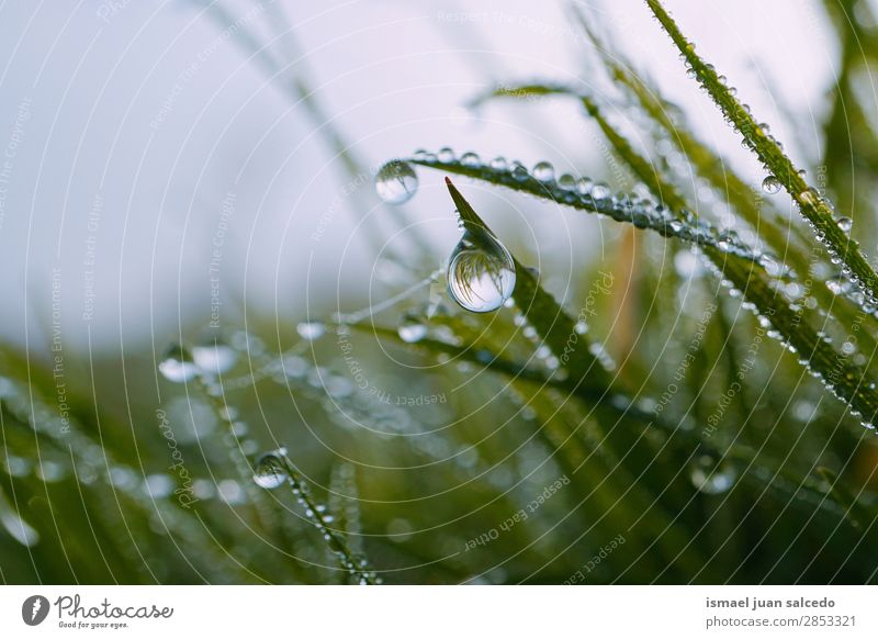 drops on the green plant Grass Plant Leaf Green Drop Rain Glittering Bright Garden Floral Nature Abstract Consistency Fresh Exterior shot background