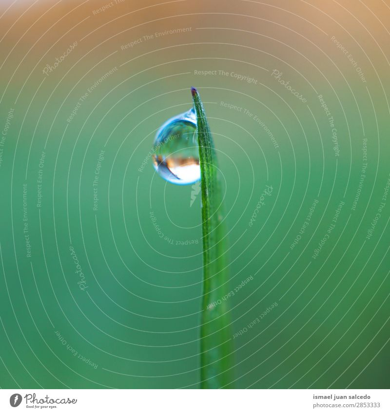 drop on the green leaf Grass Plant Leaf Green Drop Rain Glittering Bright Garden Floral Nature Abstract Consistency Fresh Exterior shot background