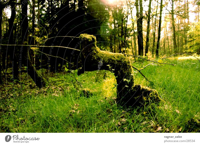 Old Green Forest Spring Branch Rotate April Tree stump