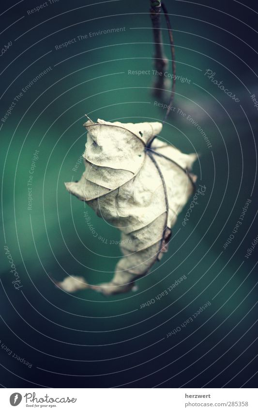 When words are missing Environment Nature Plant Animal Autumn Leaf Emotions Autumn leaves Transience Subdued colour Exterior shot Macro (Extreme close-up)