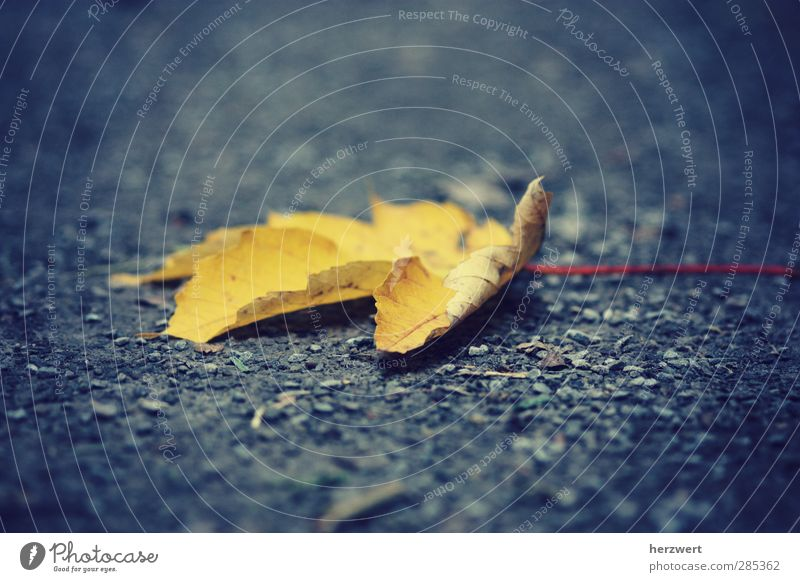 And then it's autumn Environment Nature Earth Autumn Weather Leaf Sadness To dry up Emotions Loneliness Decline Transience Grief Colour photo