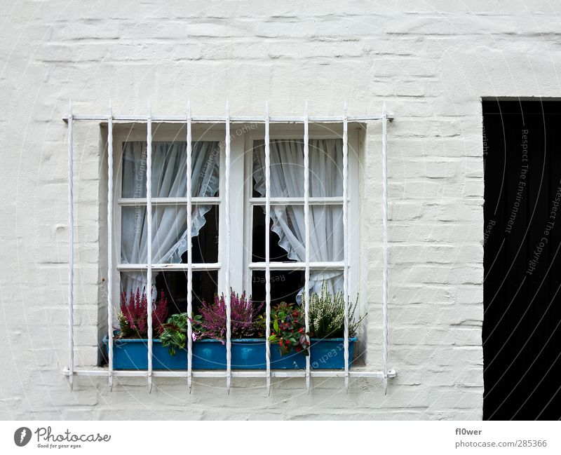 barred windows Deserted House (Residential Structure) Manmade structures Building Window Concrete Metal Old Bright Blue Black White Door Window box Grating