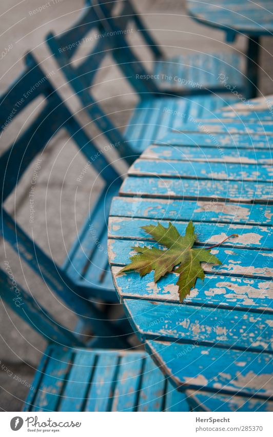 transience Restaurant Autumn Leaf Town Wood Old Esthetic Blue Calm Loneliness Sidewalk café Table Chair Flake off Dye Autumn leaves Early fall Autumnal
