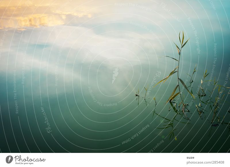 proud Harmonious Well-being Contentment Calm Meditation Summer Environment Nature Landscape Elements Water Sky Horizon Beautiful weather Plant Grass Lakeside