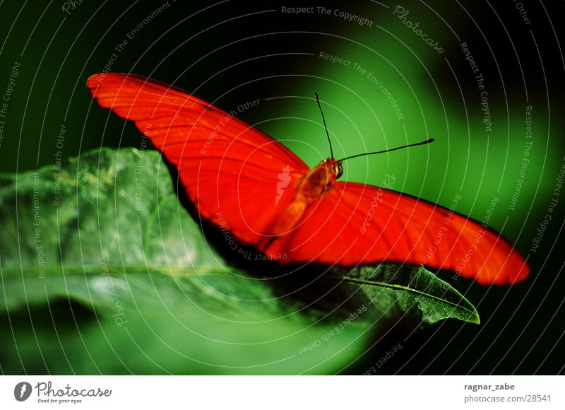 flaot like a butterfly and sting like a bee Butterfly Zoo Tropical greenhouse Green brace red-orange Contrast