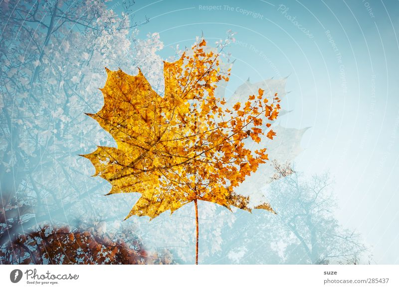 Nature Blue Plant Tree Leaf Yellow Environment Autumn Emotions Moody Weather Exceptional Esthetic Beautiful weather Transience Creativity