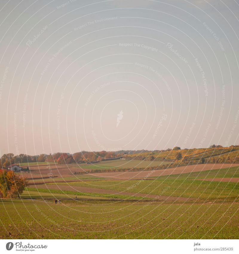 country Environment Nature Landscape Plant Sky Cloudless sky Autumn Tree Grass Foliage plant Agricultural crop Wild plant Meadow Field Hill Natural Colour photo