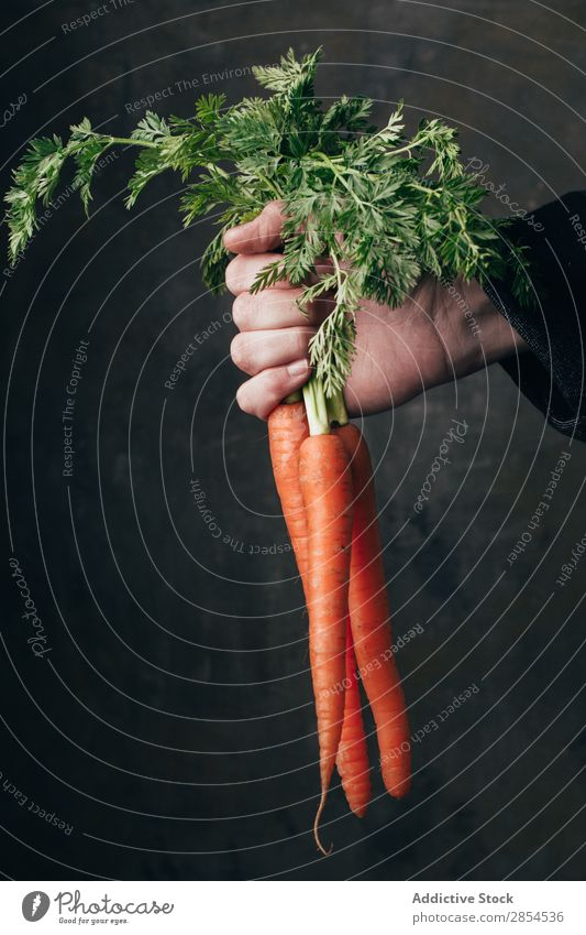 Hand holding a bunch of fresh carrots Background picture bunche Carrot Multicoloured Dark Food Fresh Harvest Healthy Hold Metal Nutrition Orange Organic Raw