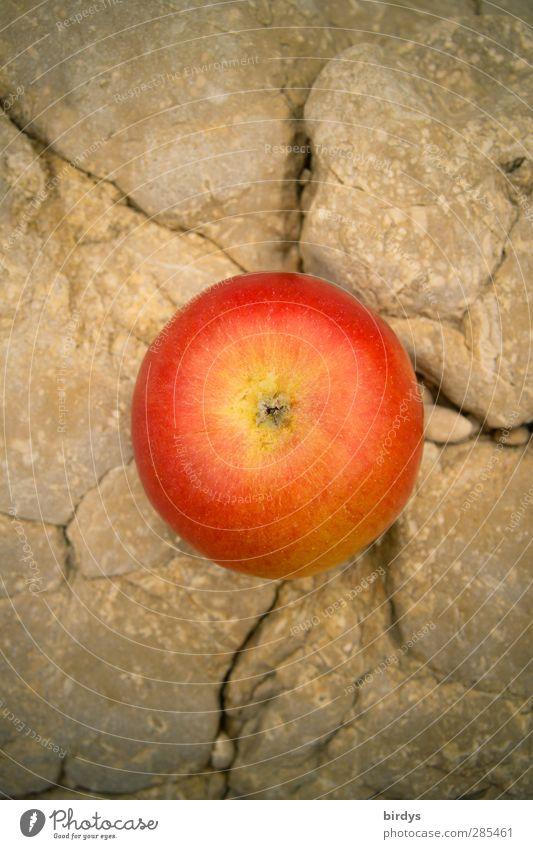 apple on the rock Apple Organic produce Summer Rock Fragrance Illuminate Esthetic Fresh Delicious Positive Round Juicy Beautiful Sweet Red Anticipation To enjoy