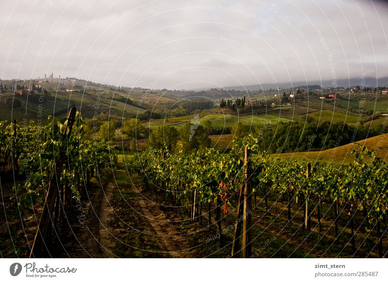 Vineyards in Tuscany Wellness Life Calm Vacation & Travel Tourism Trip Freedom Sightseeing City trip Agriculture Forestry Landscape Elements Clouds Autumn