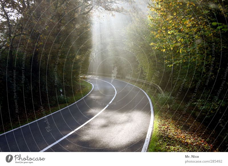 on the way Environment Nature Summer Autumn Climate Beautiful weather Tree Bushes Forest Transport Motoring Street Lanes & trails Freedom Idyll Asphalt