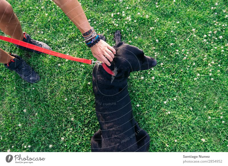 Man having fun with his dog. Dog Pet Park owner Human being Green Leash Walking Animal Running Happy Lifestyle Adults Guy Summer Caucasian Joy Grass handsome