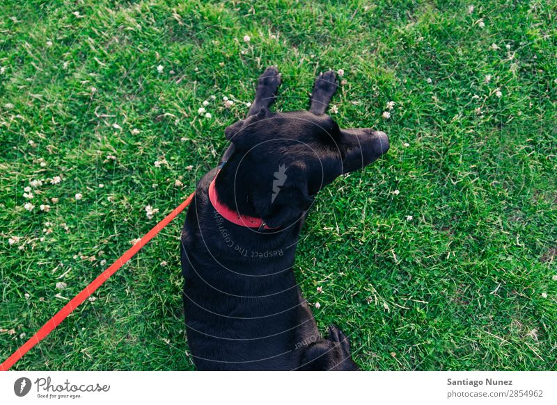 resting dog with its owner. Dog Man Pet Park Human being Green Leash Walking Animal Running Happy Lifestyle Adults Guy Summer Caucasian Joy Grass handsome Puppy
