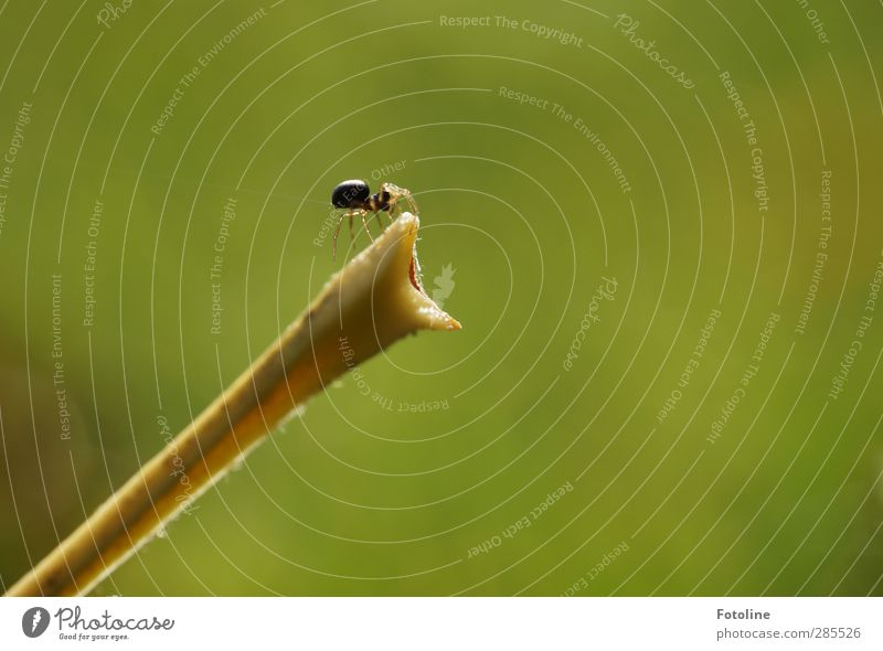 Nature Green Plant Animal Environment Autumn Small Bright Natural Near Stalk Autumnal Spider Spin