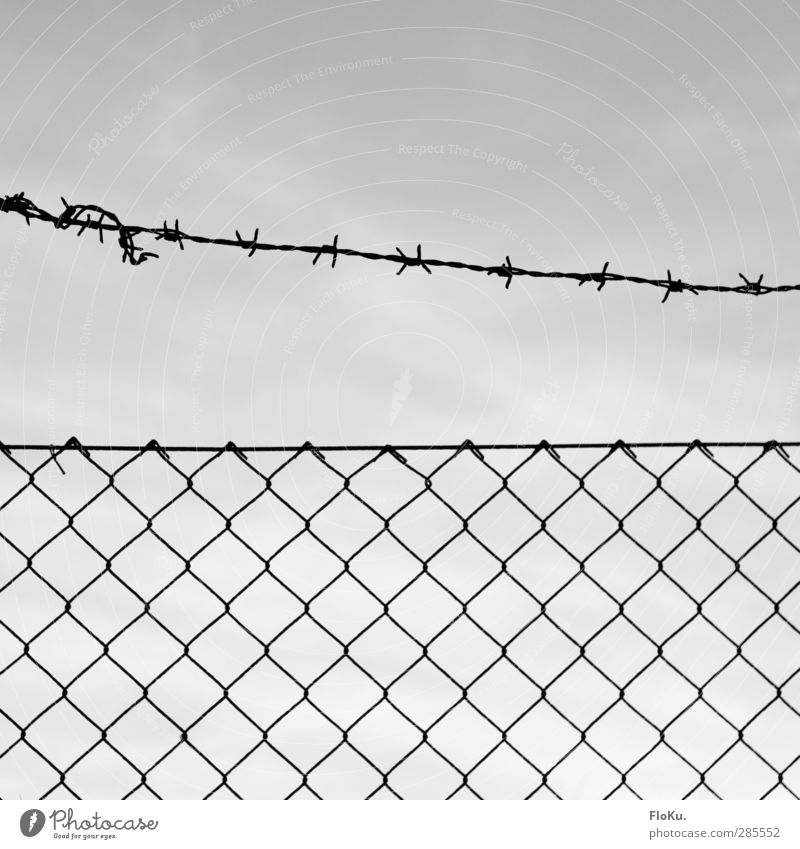 Keep out! Metal Rust Line Knot Threat Thin Thorny Gray Black Dangerous Mistrust Animosity Politics and state Bans Fence Border Border area Wire netting fence