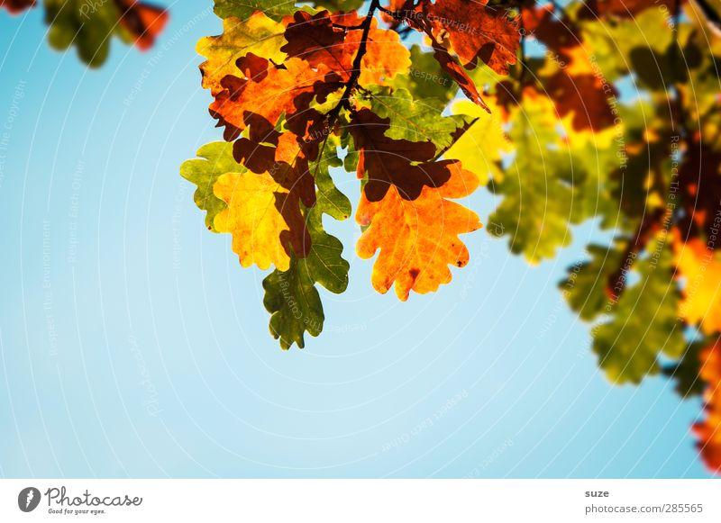 Sky Nature Blue Green Beautiful Plant Leaf Yellow Environment Autumn Natural Orange Illuminate Esthetic Beautiful weather Seasons
